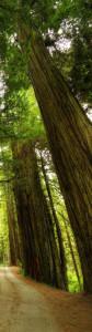 Trees Right