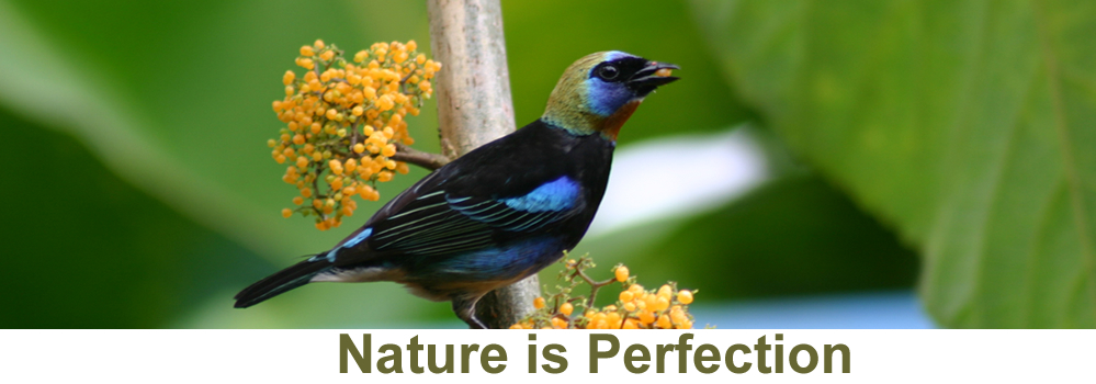 Nature is Perfection
