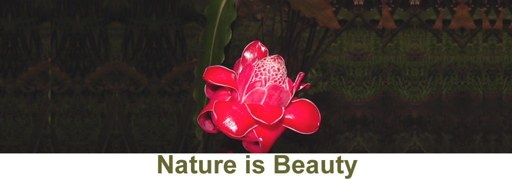 Nature Is Beauty