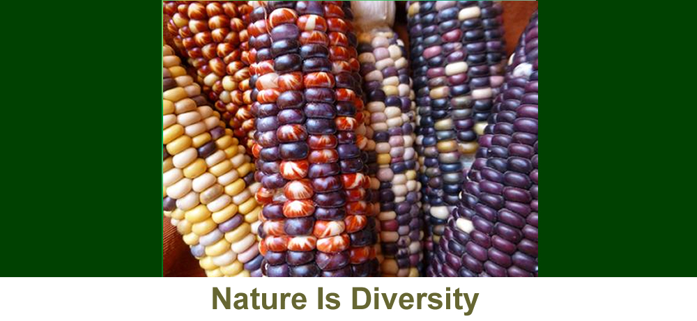 Nature Is Diversity