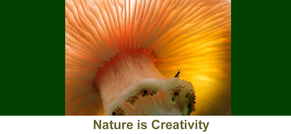 Nature is Creativity