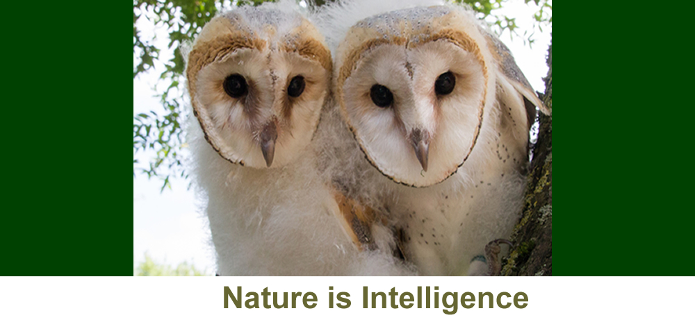 Nature is Intelligence